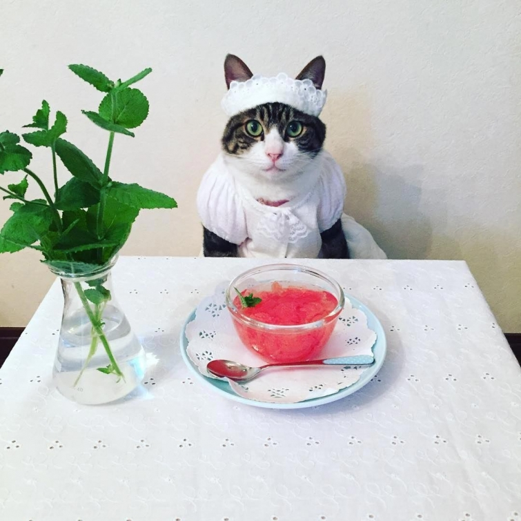 Японка каждый день наряжает своего кота к ужину