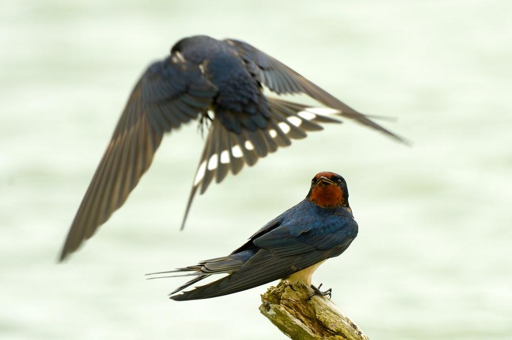 Интересные фотографии с птицами