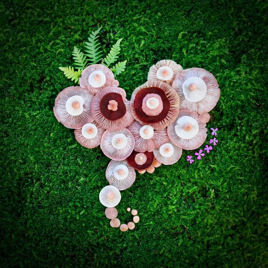 Картины из диких грибов от Саары Алхопуро