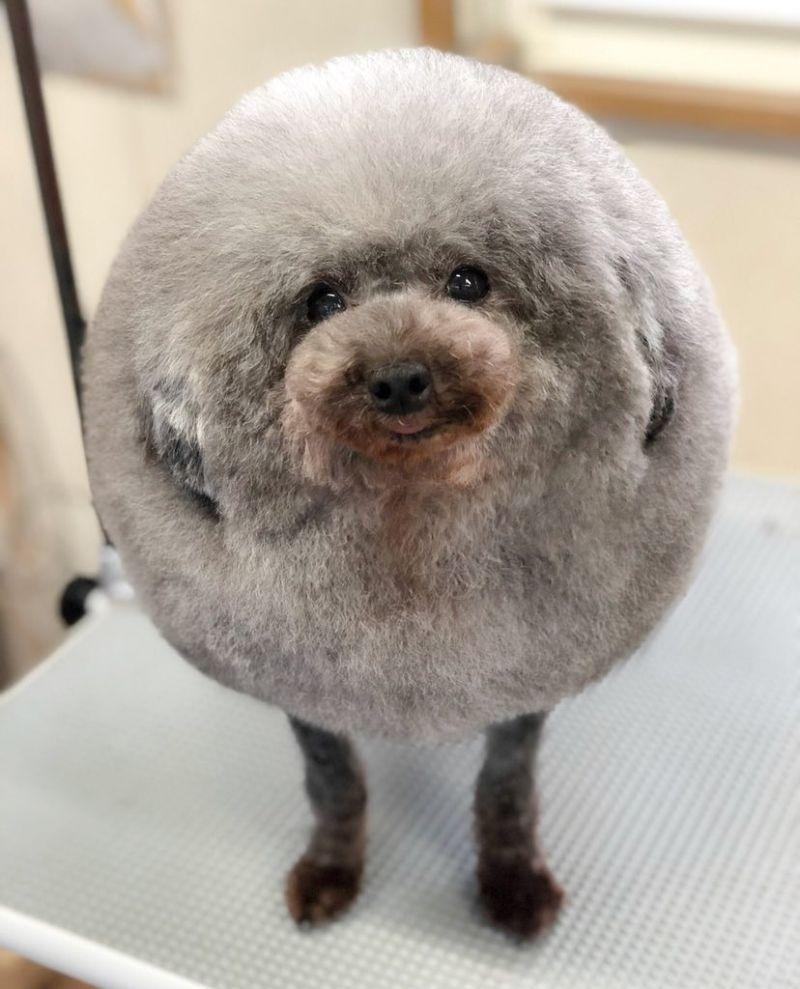 Собака круглой формы Тефтелька - новая звезда соцсетей