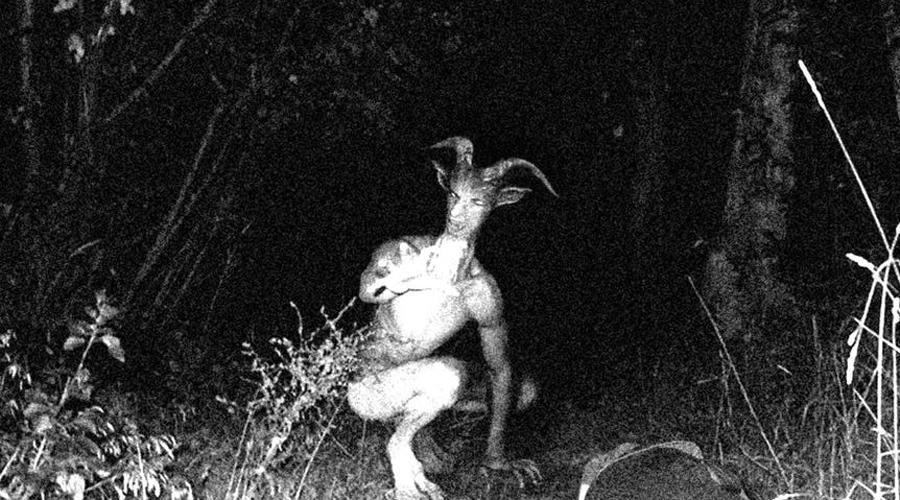 Пугающие неизвестные науке создания