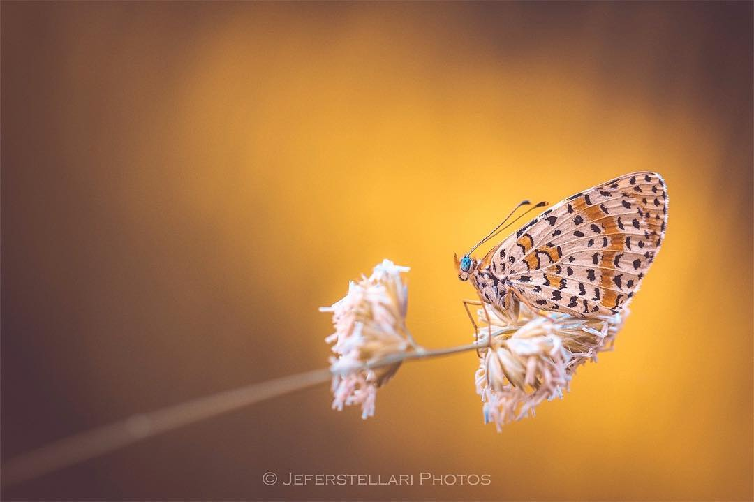 Цветы, животные и птицы от Джеферсон Сильвы Кастеллари