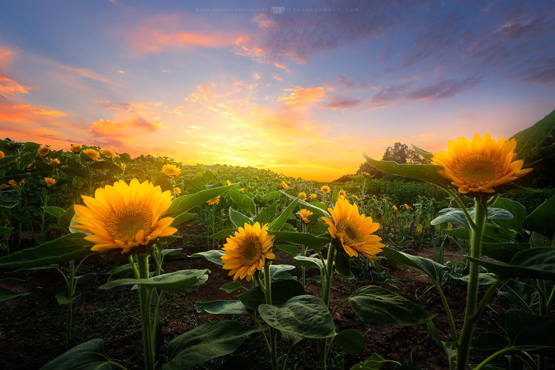 Красота природных пейзажей от Троя-Энтони Сондерса