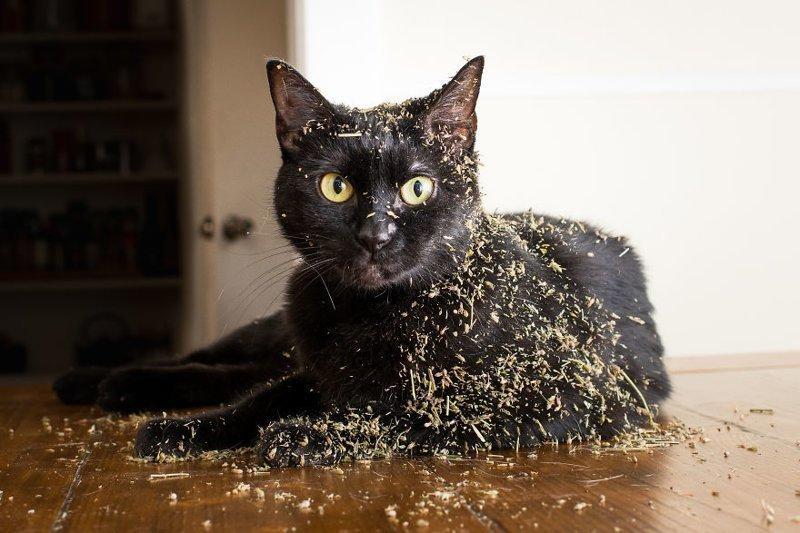Коты дорвались до кошачьей мяты