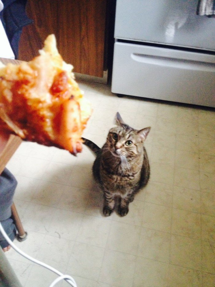10 животных и взгляд на еду