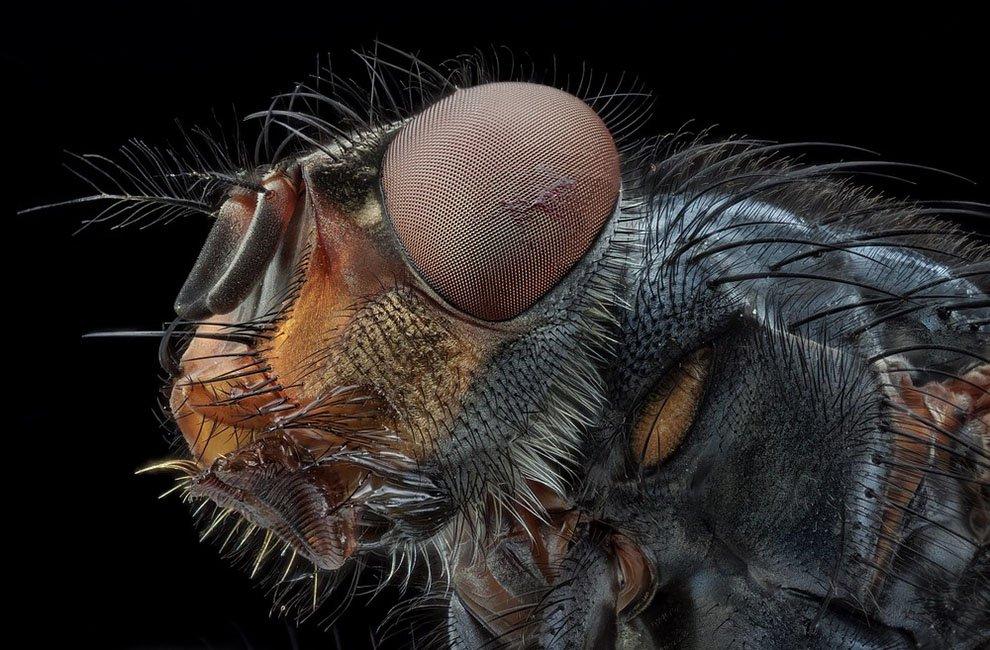 Макрофотографии насекомых от Хавьера Рупереса