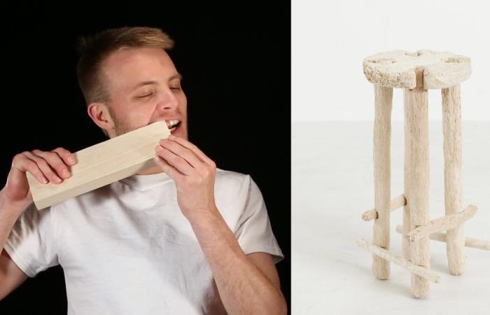 Человек-бобер сделал табуретку, используя зубы вместо инструментов