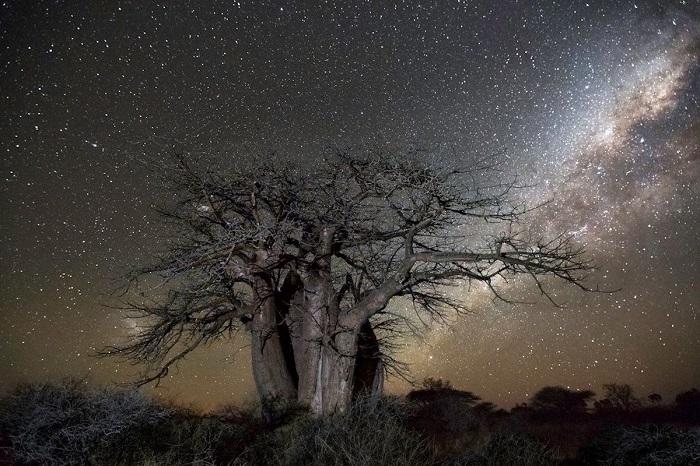 Древние деревья нашей планеты на снимках Бет Мун