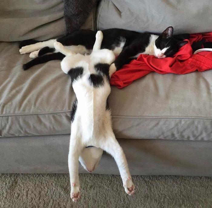 Новый кошачий флэшмоб, покоривший интернет