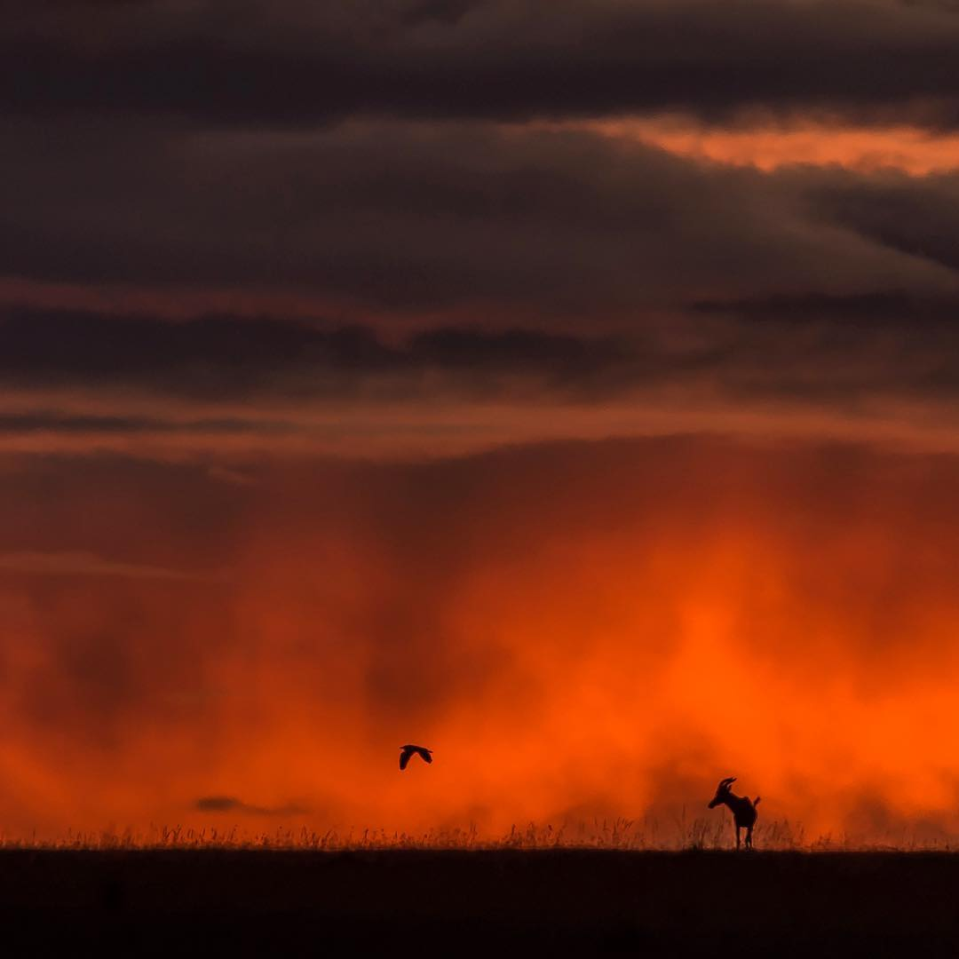 Красота природы, животных и птиц на снимках Варуна Адитья