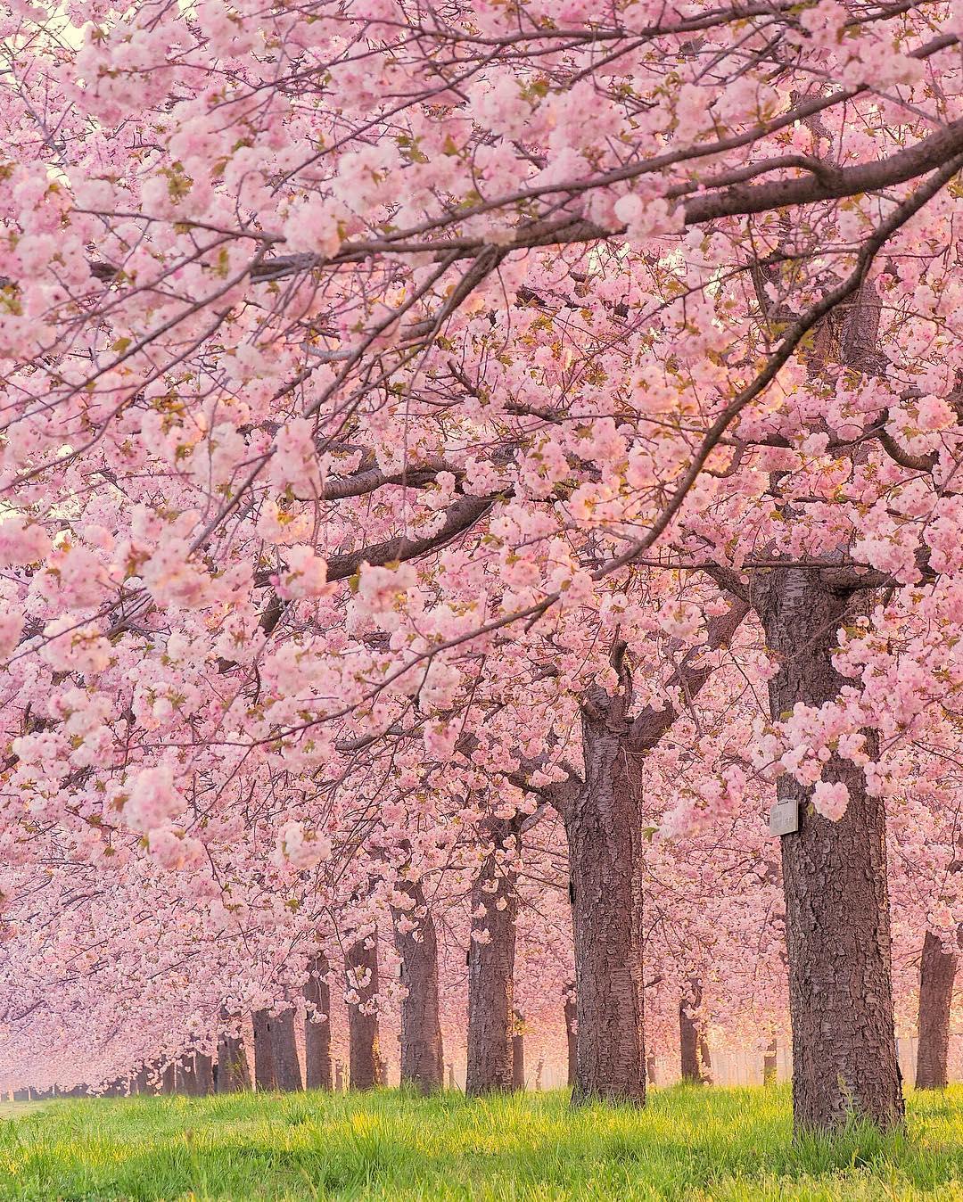 Сказочные фотографии цветов от Тацуя Курису