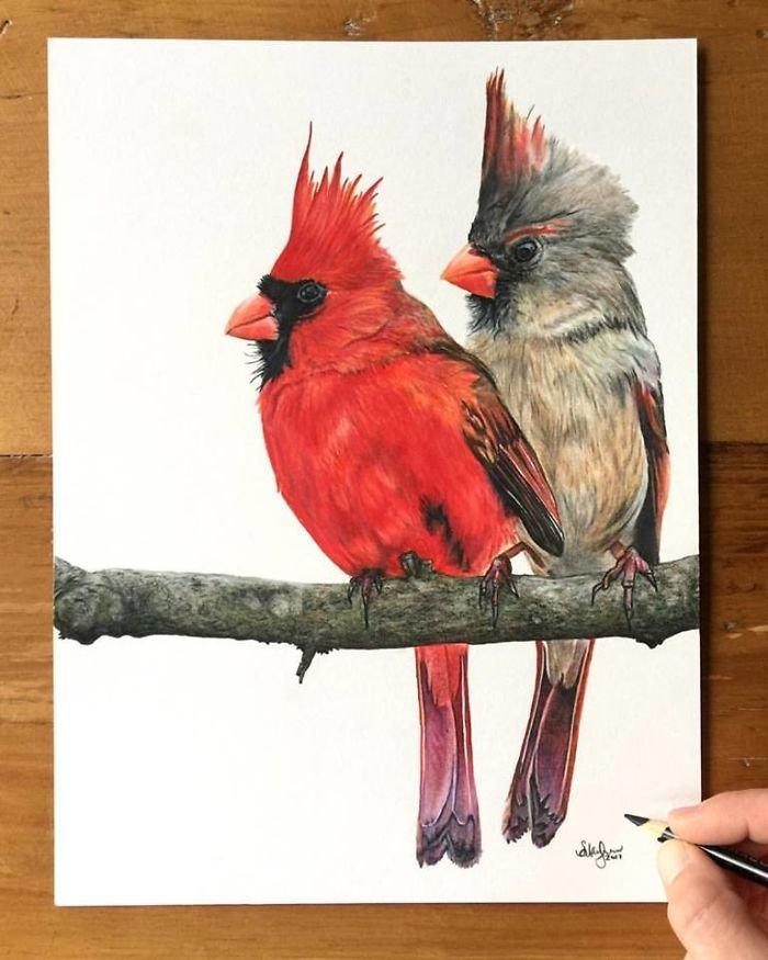 Гиперреалистичные карандашные рисунки животных