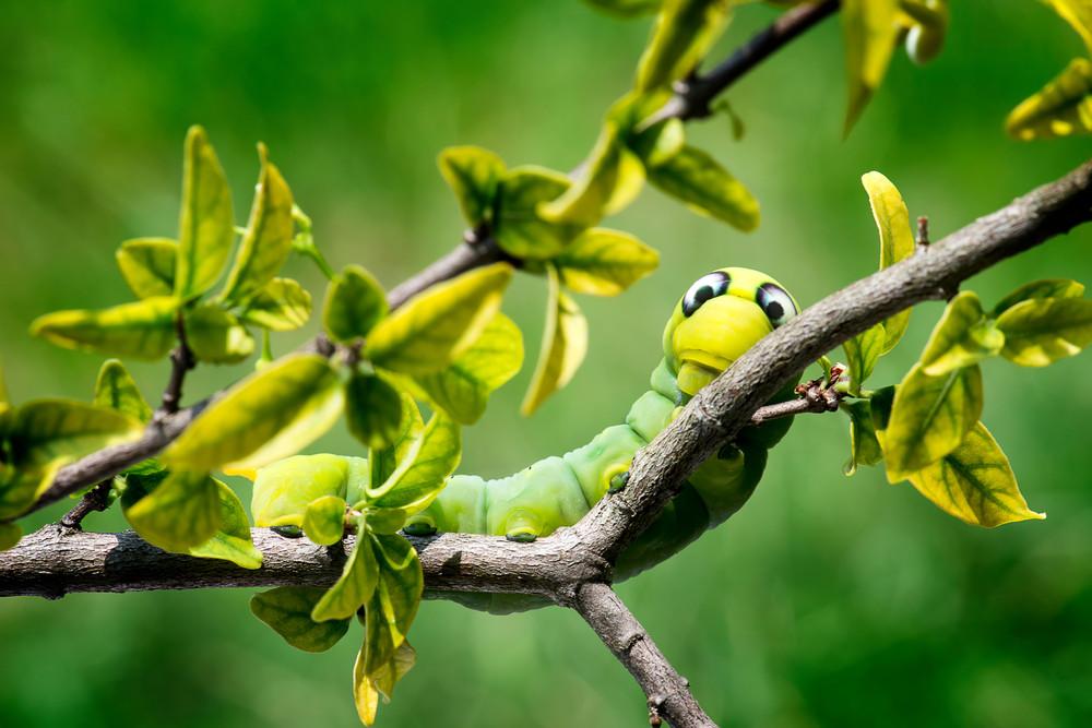 Красивые насекомые заряжают позитивом