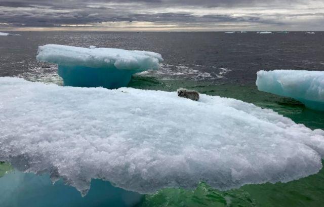 Находка рыбаков на льдине в открытом океане