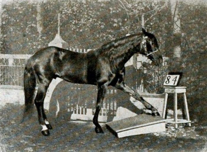 Как сложилась судьба коня, интеллект которого приравнивали к человеческому