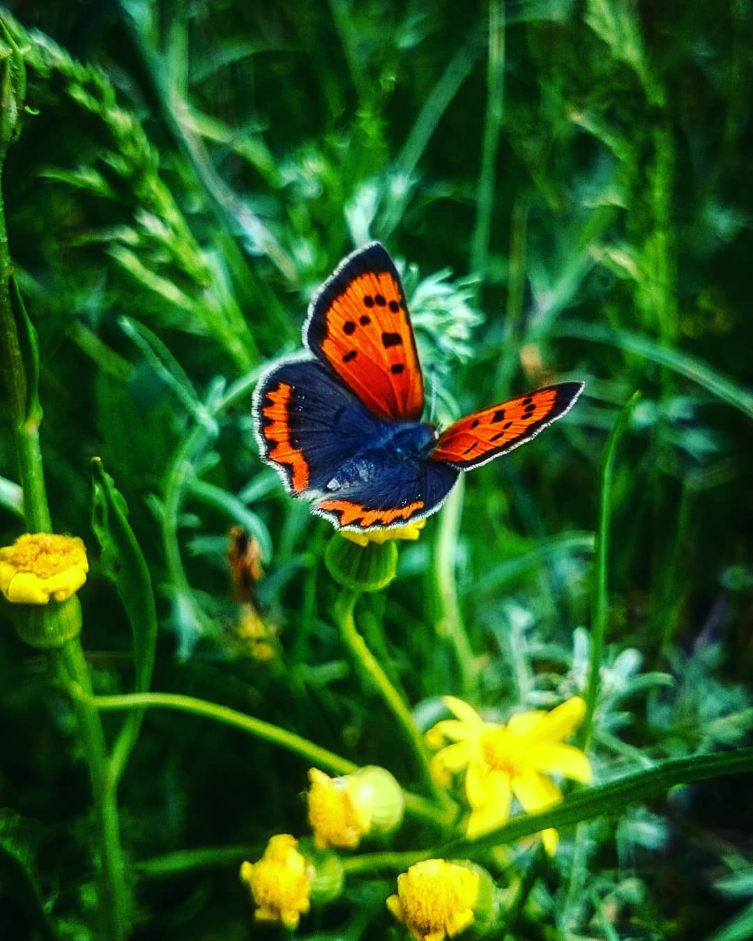 Сказочные цветочные снимки от Эртугрула Бекташа