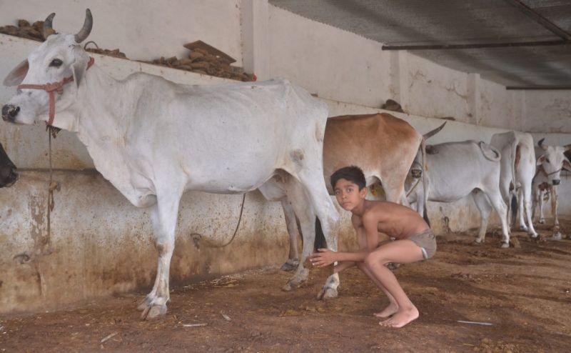 Семья три года купается в коровьем навозе после статьи в интернете