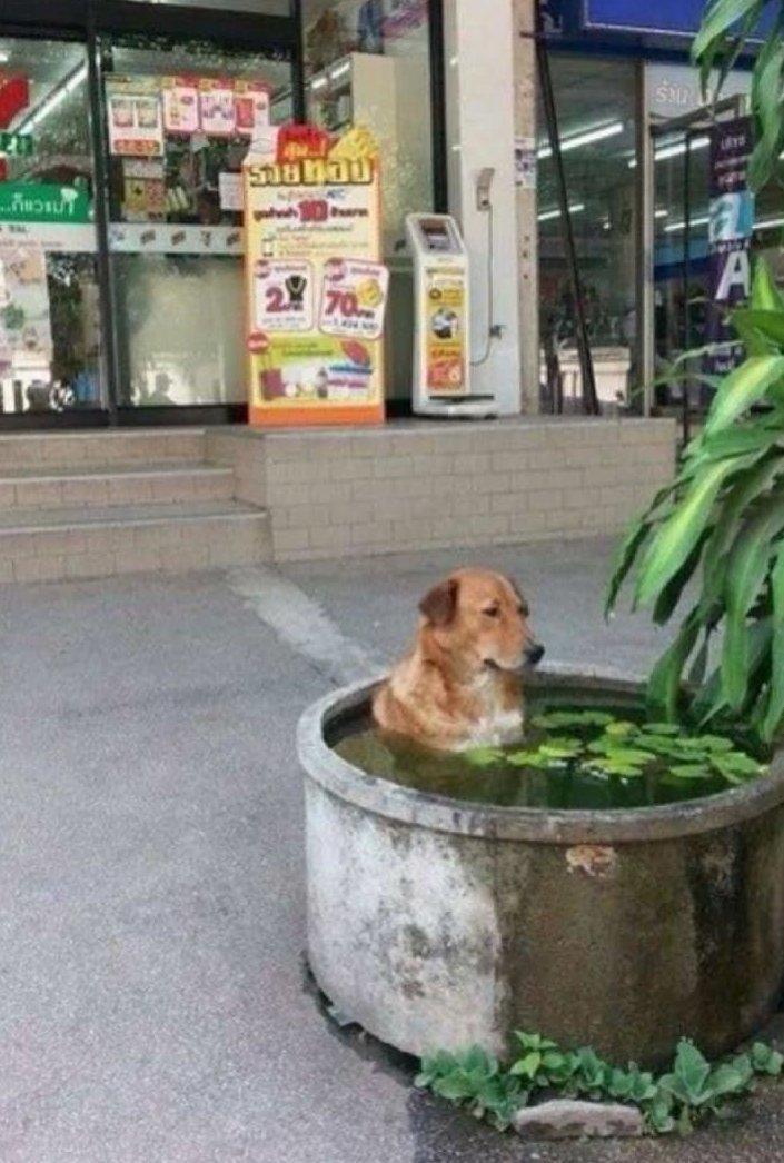 Животные спасаются от жары, как могут