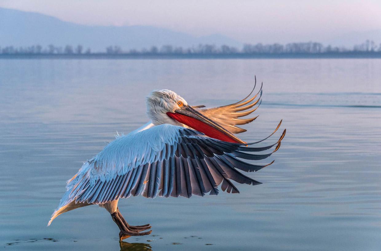 Фотографии птиц с конкурса Audubon Photography Awards 2018