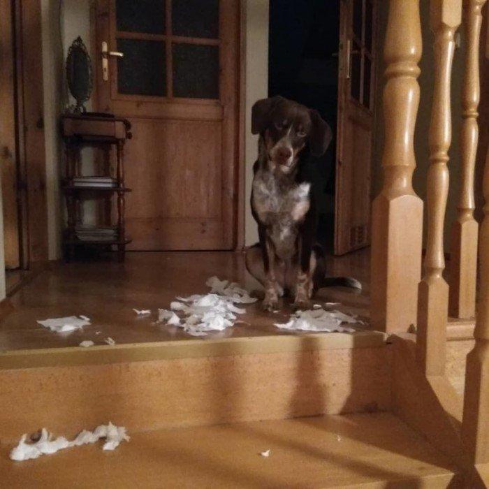 Собаки, которые очень сильно извиняются