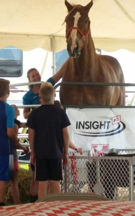 Большой Джейк - самая высокая лошадь в мире