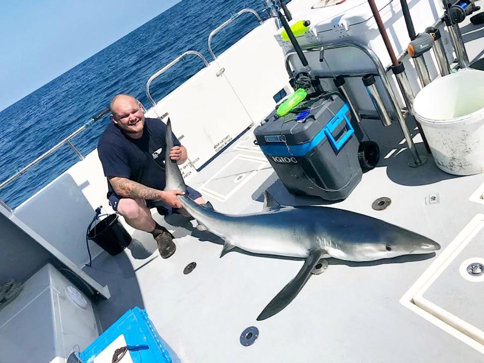 Британские рыбаки за сутки словили 20 акул