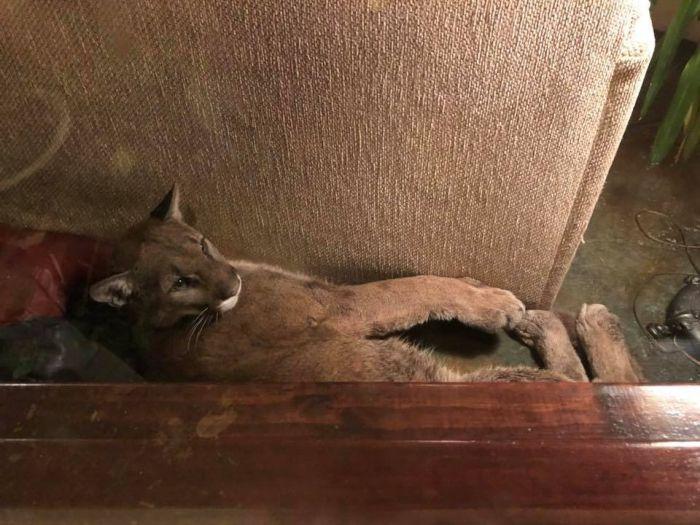 Девушка обнаружила в своем доме незваного гостя