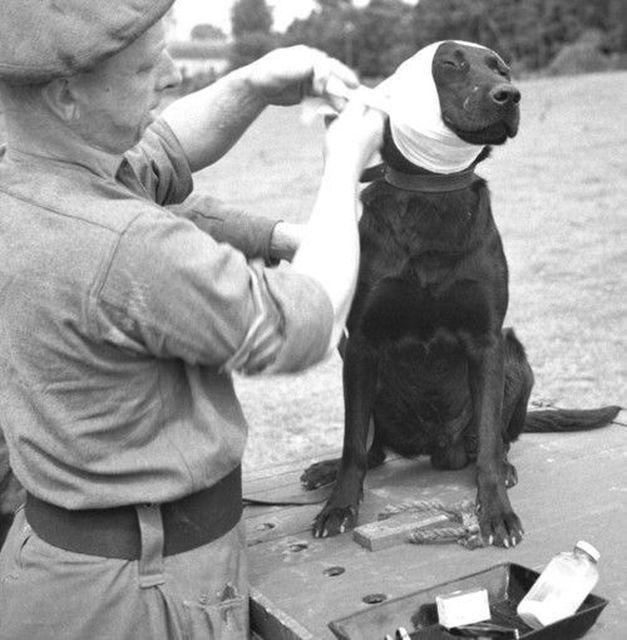 Интересные исторические фотографии 20-го века