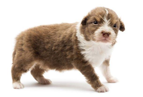Милые фото со щенками