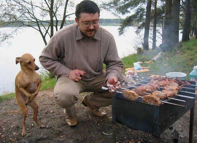 Эти собаки не прочь разделить с вами трапезу