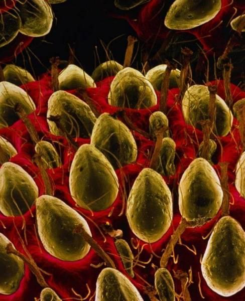Интересные вещи под микроскопом