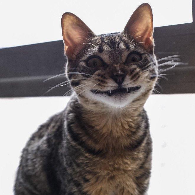 Кошки похожи на вампиров