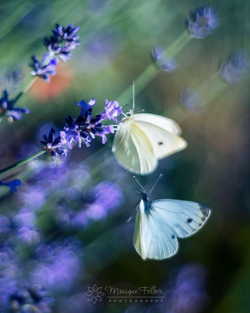 Макроснимки бабочек и цветов от Моник Фелбер