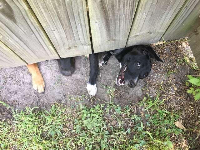 Шпионы за забором на соседском участке