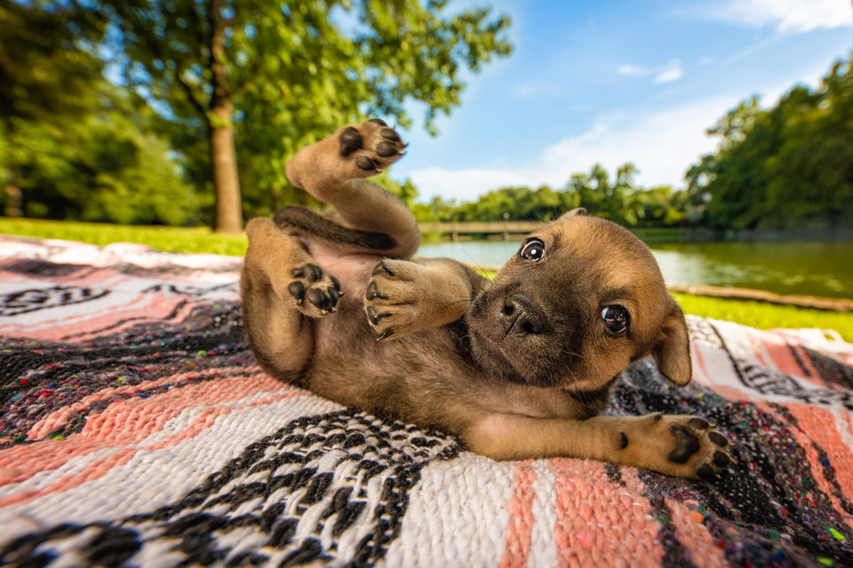 Победители фотоконкурса Dog Photographer Of The Year 2018
