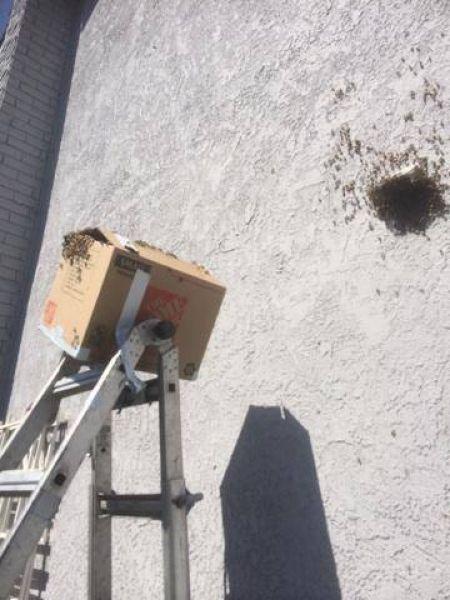 Мужик обнаружил в своем гараже гигантское гнездо пчел