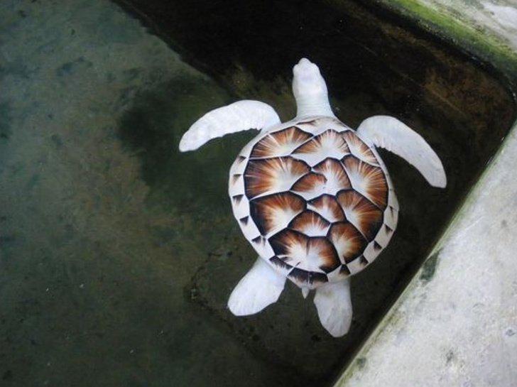 Животные с необычным окрасом, когда природа не пожалела фантазии