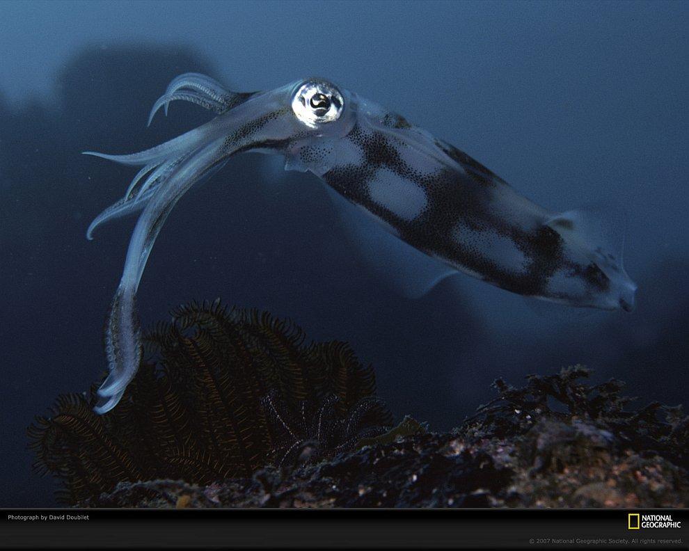 Удивительные жители подводного мира на снимках