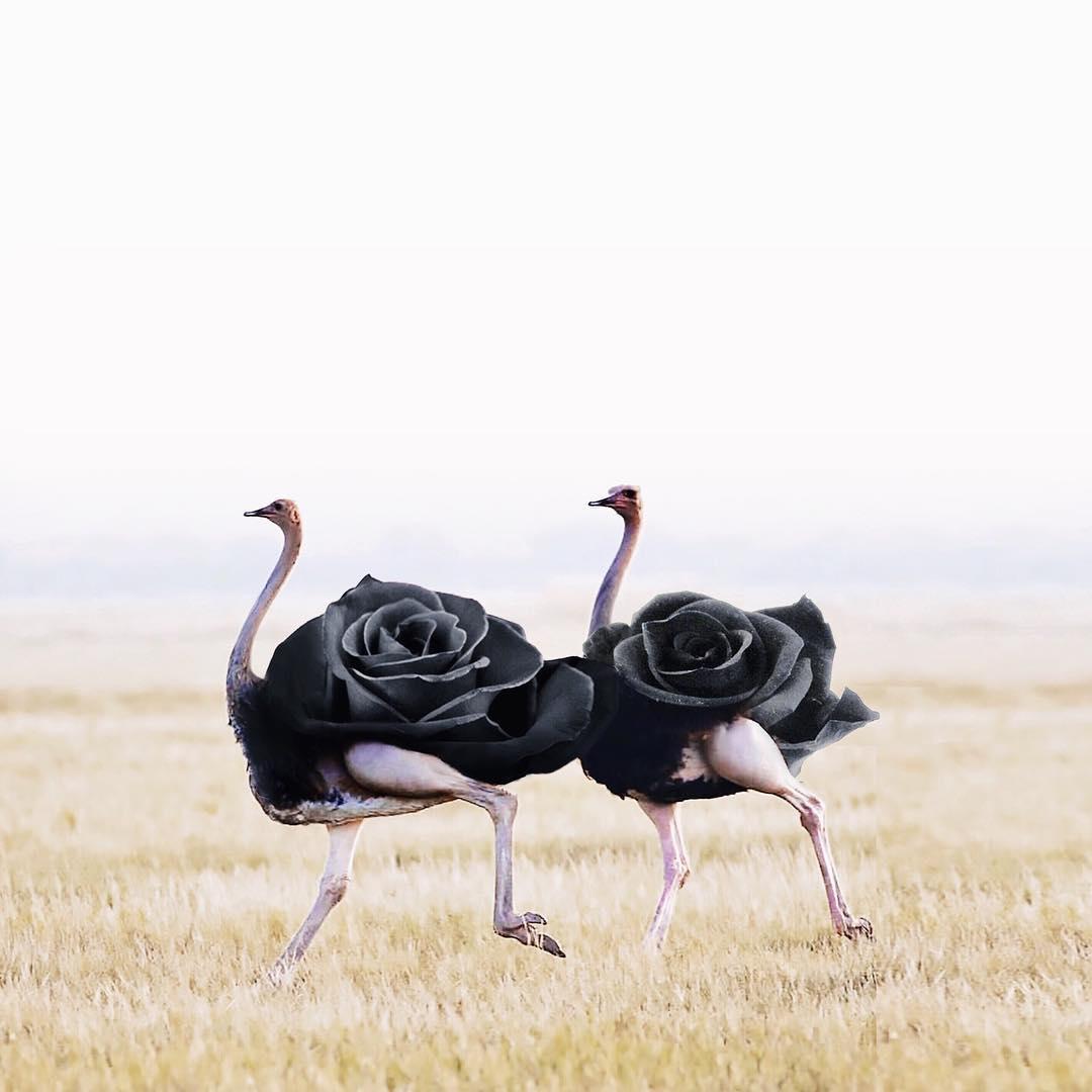 Причудливые и сказочные фотоманипуляции от Луизы Азеведо