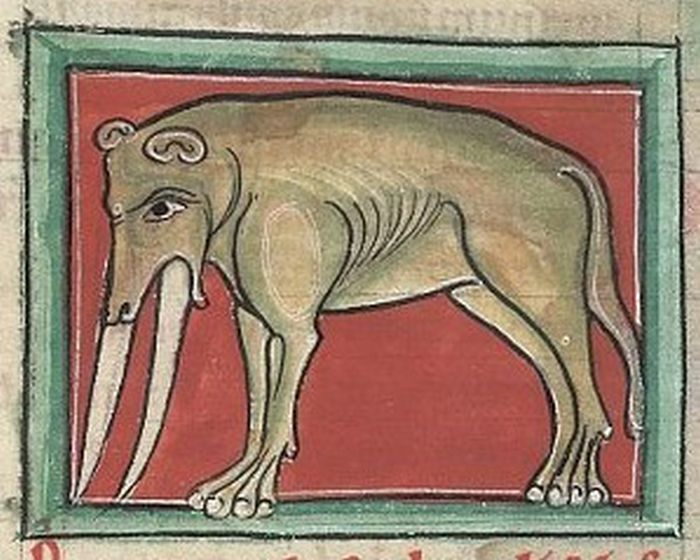 Как выглядел слон на средневековых рисунках