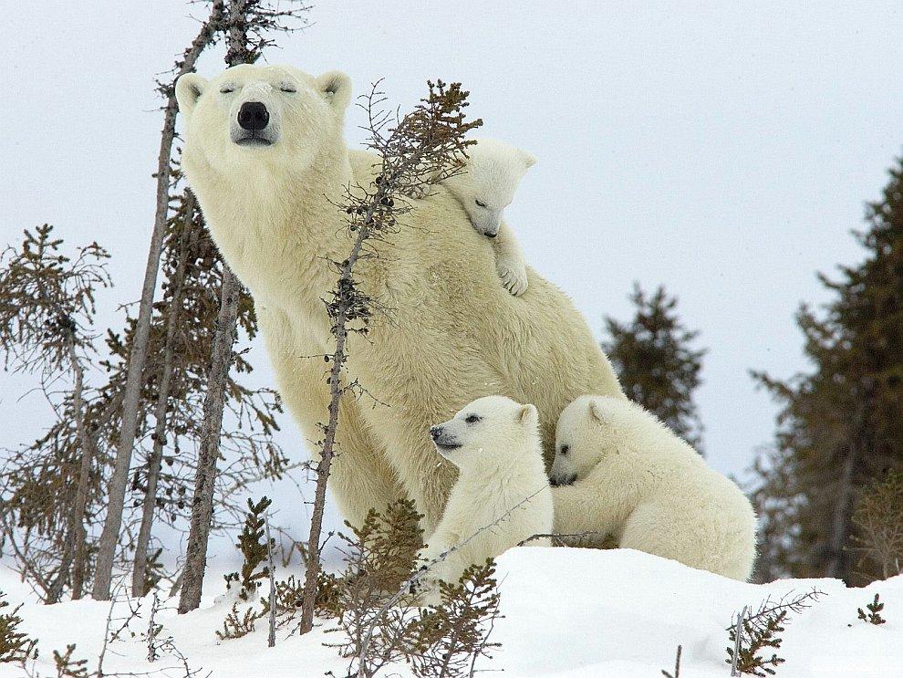 Милые детеныши разных животных