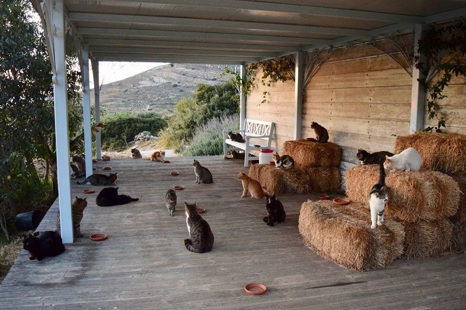 Кошачий приют на греческом острове ищет нового управляющего