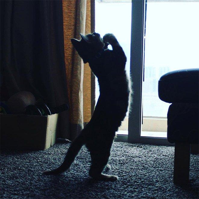 Кошки молятся своему кошачьему божеству