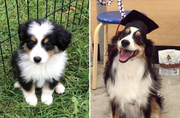 20 превращений из щенков во взрослых псов на снимках