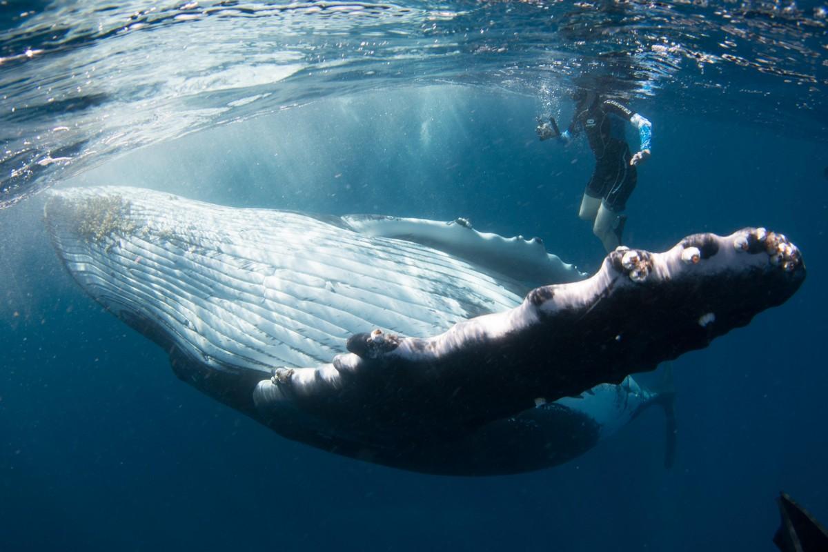 Невероятные снимки кита с человеком