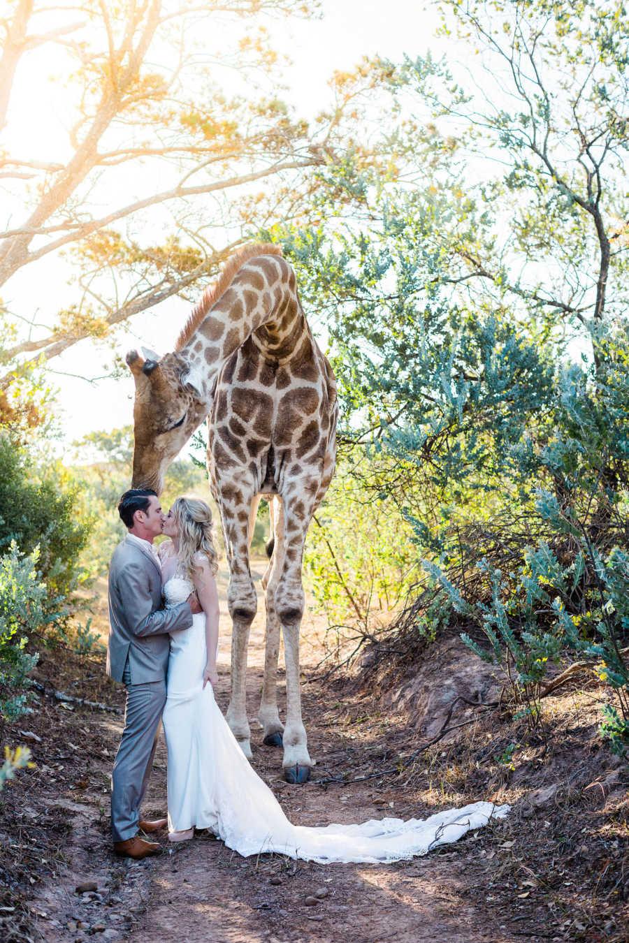 Любопытный жираф на свадьбе