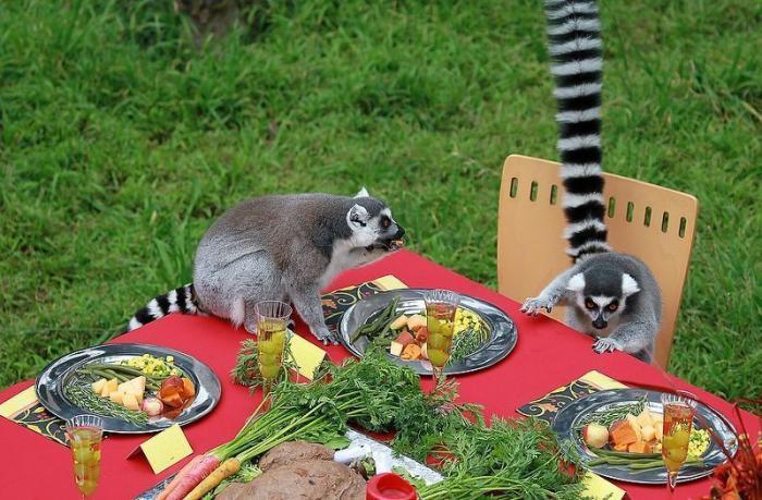 Праздничный стол для лемуров