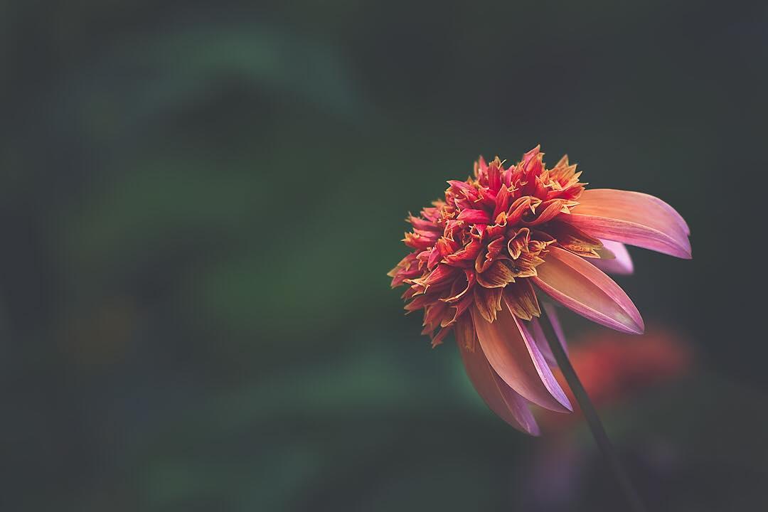 Красивые снимки цветов крупным планом от Лизы Брианд
