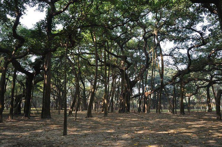 Огромный лес из всего одного дерева