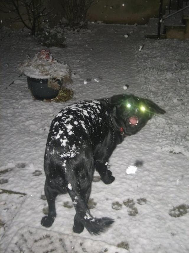 Эти странные псы сломались?